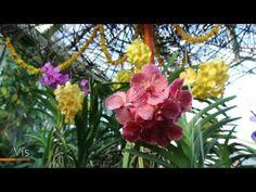 Kew Gardens Orchid Festival 2017 - YouTube
