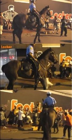 Cop Approaches Men On Streets, Then Horse Hears Favorite Song & Leaves Everyone Jaw Dropped! #horse #horses #pets #animals