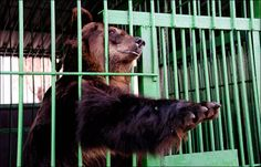 New zoo for animals rescued from cages flooded in September ...