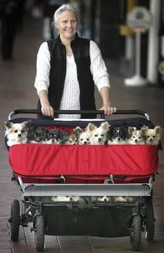 Let's all be honest here. If I hadn't met my husband this would TOTALLY be me. Only with bigger dogs.