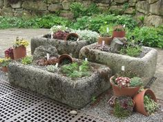Miniature rock gardens in troughs, RHS Wisley, UK.