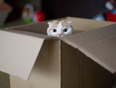 届いた荷物が入っていた箱を放置していたら入り込んでいたポッケ