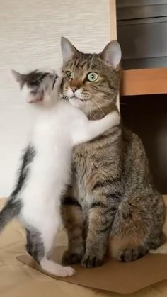 Funny Cute Cats, Cute Baby Cats, Cute Cat Gif, Cute Cats And Kittens, Cute Little Animals, Cute Funny Animals, Kittens Cutest, Cute Animal Photos, Cute Animal Videos