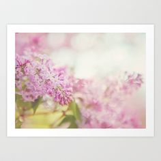 Lilac  Art Print by Butterfly Photography - $20.00