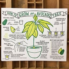 Herbs Gardening How To Grow An Avocado Tree Broadside - An letterpress poster based on our popular Lobster broadside. Printed on extra heavy Gmund Heidi recycled cover stock. Includes a great avocado toast recipe! Organic Gardening, Gardening Tips, Gardening Books, Pallet Gardening, Kitchen Gardening, Urban Gardening, Hydroponic Gardening, Garden Plants, House Plants