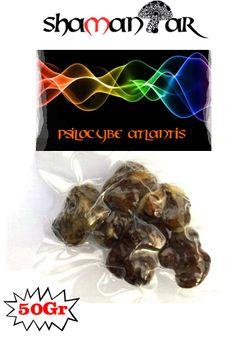 Shamantar: Psilocybe atlantis,Magic truffles,magic mushrooms,truffles,magic,sclerotia,Amsterdam,Atlantis,Psychedelic, #amsterdam truffles #Psychedelic truffles #magic truffles #Psilocybin #Truffles #Truffle #Mushrooms