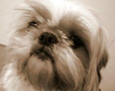 My cute little puppy, Yvette (4)