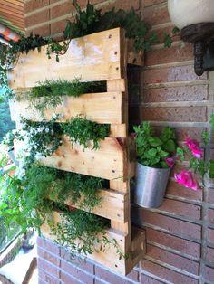 Mi huerto vertical - My vertical Garden