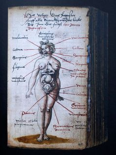 Nude Female Anatomical Figure, artist unknown, from Arzneibuch, 1524–c. 1550    color wash and ink    Image courtesy of Wellcome Images, London