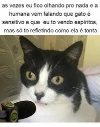 Resultado de imagem para gato entrevistado
