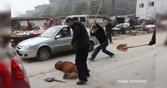 Reject World Dog Show in China - In Defense of Animals
