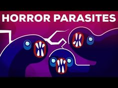The Most Gruesome Parasites – Neglected Tropical Diseases – NTDs - YouTube