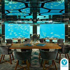 Se você está cansado de ir a restaurantes comuns, conheça este que fica embaixo das águas em um hotel nas Ilhas Maldivas. Dá para apreciar peixes coloridos, recifes de corais, arraias e até tubarões enquanto você faz a sua refeição.