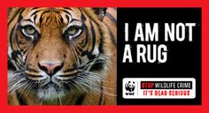 Hands Off My Parts | Pages | WWF