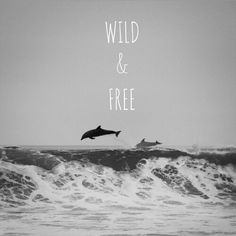 Wild and free wallpaper Cool Wallpaper, Wallpaper Backgrounds, Dolphin Images, Friendly Letter, Life Symbol, Most Beautiful Images, Kawaii, Expo, Wild And Free
