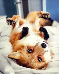 . Fox love ❤️
