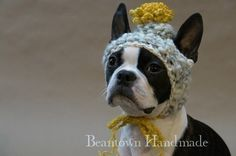 I'm sure all dogs love hats.