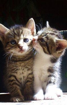 Sweet kitteh snuggles