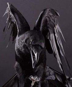 An Exquisite Paradox Raven Pictures, Rabe Tattoo, Raven Bird, Crow Art, Legends And Myths, Crows Ravens, Arte Horror, Wildlife Art, Dark Beauty