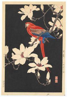 西村 蒲堂 / Nishimura Hodo - Parrot on a branch of magnolia, 1937