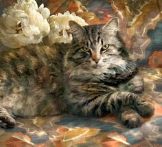 Maine Coon Cat and Peonies