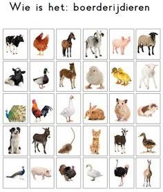 Wat een leuk idee, op deze site vind je allerlei varianten voor het Wie is het?-spel, zoals (boerderij)dieren, voertuigen en vormen/kleuren. Gratis te downloaden ook nog! Farm Animals, Animals And Pets, French For Beginners, Farm Activities, Animal Projects, Animal Cards, Pre School, Teaching Kids, Autism