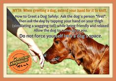 MYTH: The best way to greet a dog is to extend your hand towards the dog's face so he/she can sniff you. TRUTH: You never want to force yourself into a dog's space/face. Learn WHY and what to do here:https://www.facebook.com/photo.php?fbid=226512424140148&set=pb.168743903250334.-2207520000.1405977361.&type=3&theater