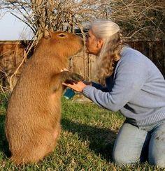capybara - Google Search