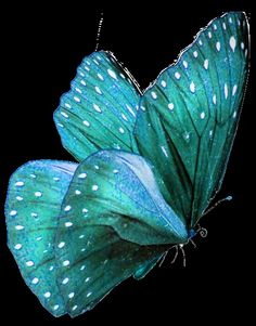 turquoise butterfly by Faby Posadas