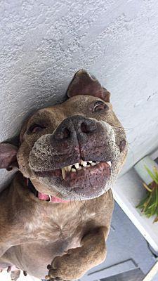 Orlando Fl Terrier Unknown Type Medium Meet Zeus A Pet For Adoption Pet Adoption Pets Puppy Adoption