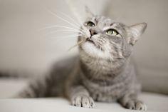 Photo d'animaux : conseils et astuces