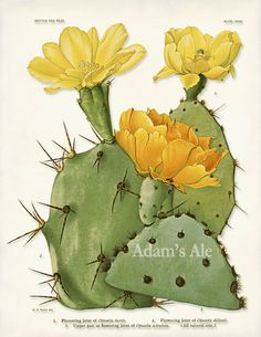 Desert Cactus Poster, Cactus Print, Yellow Cactus Blossom, Botanical Art Print, Desert Art, Desert Home Decor, Summer Art Wall Hanging