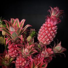 @mag.gieshep.herd A bouquet of pineapples by Emily Thompson @emilythompsonflowers #emilythompson #flowers #flora #pineapples #bouquet #design #florist #plant #bromilliads #food #nature #climber #elegant #exotic #stilllife #stylish #natural #botany #botanical #garden #horticulture #decor #gourmet #cuisine #juicy #leaves #tropical