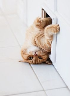 I'm not stuck....just a cat hanging out