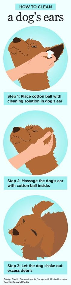 How to Clean a dog's ears #pets #infographic #dogtraininghacks