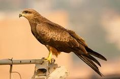 1000 Images About Birds In Tata Colony On Pinterest The