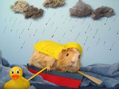 April Showers . . . . Well, you know the rest. #guineapigs  now I want to make a guinea pig calendar!