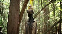 Aokigahara, Japan , looks like this guy has been hanging around for a long time now .