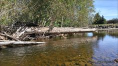 Buck Creek.Photos taken on August 13, 2016 in Houston, BC. Travel Houston, British Columbia with Brian Vike.