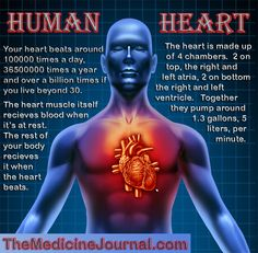 10 Quick Facts About 4 Of Your Major Organs Human Body Facts, Facts About Humans, Let It Out, Human Heart, Heart Health, Amazing Facts, Interesting Facts, In A Heartbeat, Viral Videos