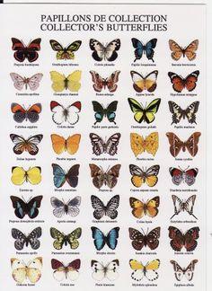Butterflies from Japan