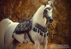 The most important role of equestrian clothing is for security Although horses can be trained they can be unforeseeable when provoked. Riders are susceptible while riding and handling horses, espec… Beautiful Arabian Horses, Most Beautiful Horses, Horse Saddles, Horse Tack, Western Saddles, Horse Stalls, Beautiful Creatures, Animals Beautiful, Horse Riding Clothes