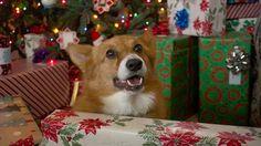 Come fare un albero di Natale con un cane in casa