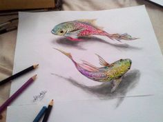 Color Pencil Drawing Art is my hobby! It's too hard for me to drawing a on papers. Just Improving. - Art is my hobby! It's too hard for me to drawing a on papers. Just Improving. 3d Pencil Drawings, Animal Drawings, Drawing Animals, Amazing Drawings, Cool Drawings, Fish Drawings, Flower Drawings, Pretty Drawings, Color Pencil Art
