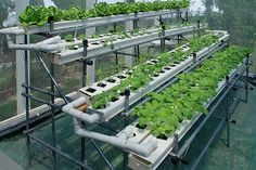 Hydroponic Gardening Homemade Hydroponics System Is Easy For Your Home Garden ~ Hydroponics - Soil-less Gardening. Homemade Hydroponic System, Home Hydroponics, Hydroponic Farming, Hydroponic Growing, Hydroponics System, Growing Plants, Aquaponics Diy, Greenhouse Farming, Hydroponic Vegetables