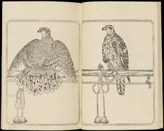 Ehon taka kagami (An Illustrated Mirror of Falconry) Caricatures, Vintage Art, Vintage World Maps, Japanese Bird, Museum Of Fine Arts, Western Art, Natural History, Asian Art, Art Images