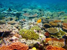Please sign! Save Rapidly Deteriorating Coral Reefs!