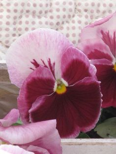 c6006ac2659 85 Best Plum   Pink Cottage images