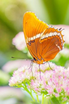 butterfly by Rian Krenzer on 500px