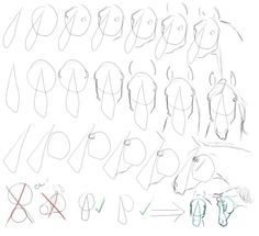 Horse - how to draw a head - differents angles